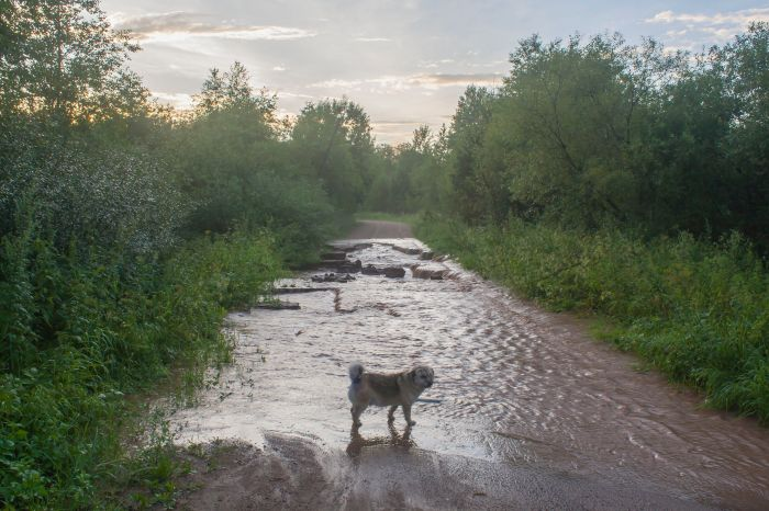 83420269 - water flows through a dirt road