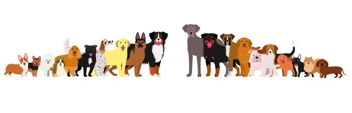 74942912 - border of dogs arranged in order of height